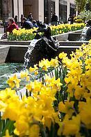 Bright yellow flowers in Rockefeller Center, Manhattan