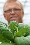 Foto: VidiPhoto<br /> <br /> DEIL - Paksoi is eigenlijk een allemansvriend. De knapperige en wat onbekende groente past zowel in een stampot, als in een groene salade, gekookt of gewokt. Ondanks zijn relatieve anonimiteit en enigszins exclusiviteit, de prijs ligt flink hoger dan een krop sla, mag de snel te bereiden, slanke vitaminebom zich verheugen in toenemende belangstelling. Mede dankzij de diverse kookprogramma's op tv. Met zichtbaar plezier snijden de broers Frans en Dirk (foto) den Hollander de kroppen paksoi met de hand en verpakken ze direct voor veiling Zaltbommel. Daar gaat de complete oogst van 1 miljoen stuks op jaarbasis naar toe. Vandaaruit gaan ze voor verdere behandeling naar een viertal grote afnemers, waaronder Greenery, met als uiteindelijke doel de Nederlandse consument. De Fa. S. den Hollander ishet enige teeltbedrijf onder glas (2 ha) dat alleen -en dat ook nog eens jaarrond- paksoi produceert. Ook in de winter gaat de productie, zij het met een ander ras, gewoon door. Het enige verschil is de groeitijd: zomers vijf weken, tegen 's winters twaalf.