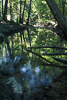 Creek in a Forest