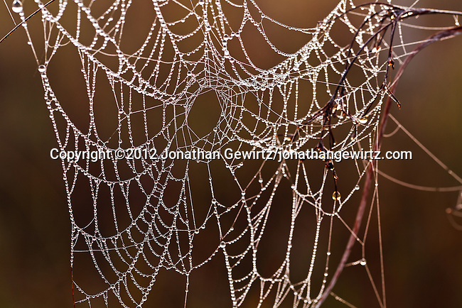 A spider web covered in morning dew drops in the Florida Everglades.