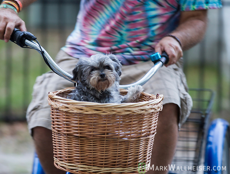 Muffin takes a ride at the 2017 Wanee Festival at the Spirit of the Suwannee Music Park in Live Oak, Florida.