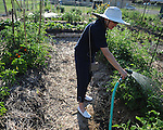 Kathy Wachter waters plants as the Community Garden celebrates its first growing season in Oxford, Miss. on Monday, June 21 2010.