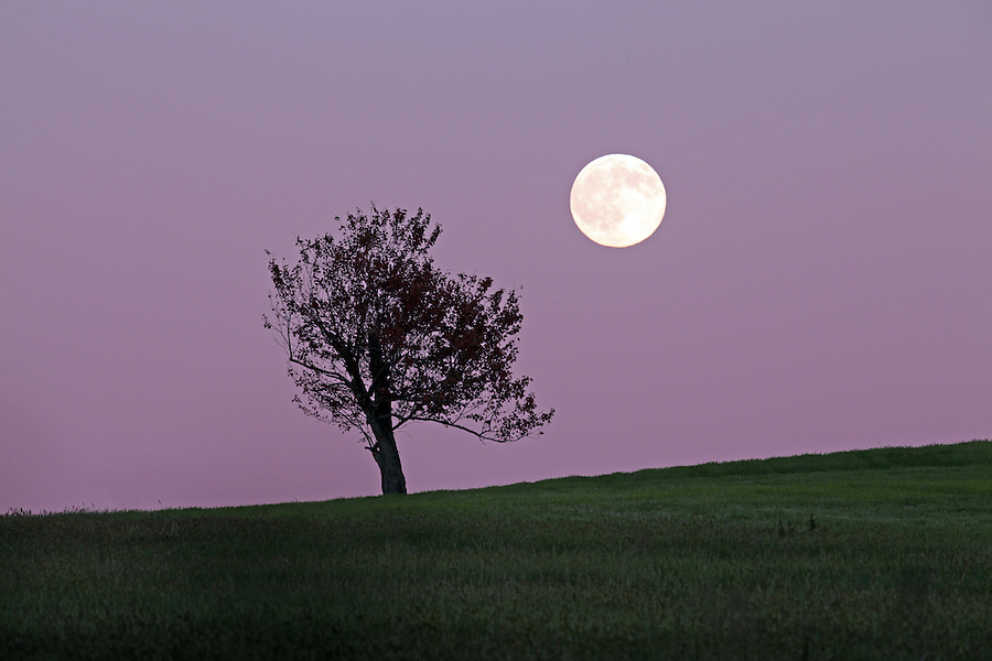 Moonrise over a field in Charlottesville, VA.