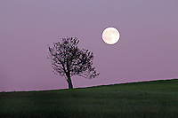 Moonrise over a field in Charlottesville, VA.