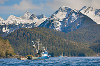 Cape purse seiner Island Pride prepares for the 2006 Sitka Sac Roe Herring Fishery opener in Sitka Sound, southeast, Alaska.
