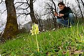 A botanist surveying orchids (Dactylorhiza romana) by taking GPS coordinates