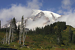 Many changes of weather on Mount Rainier.  Mt. Rainier is heavily glaciated, dormant volcano surrounded by alpine parks. The 14,411 foot volcano which covers 228,480 acres was designated a National Park in 1899. Jim Bryant Photo. ©2012. All Rights Reserved...