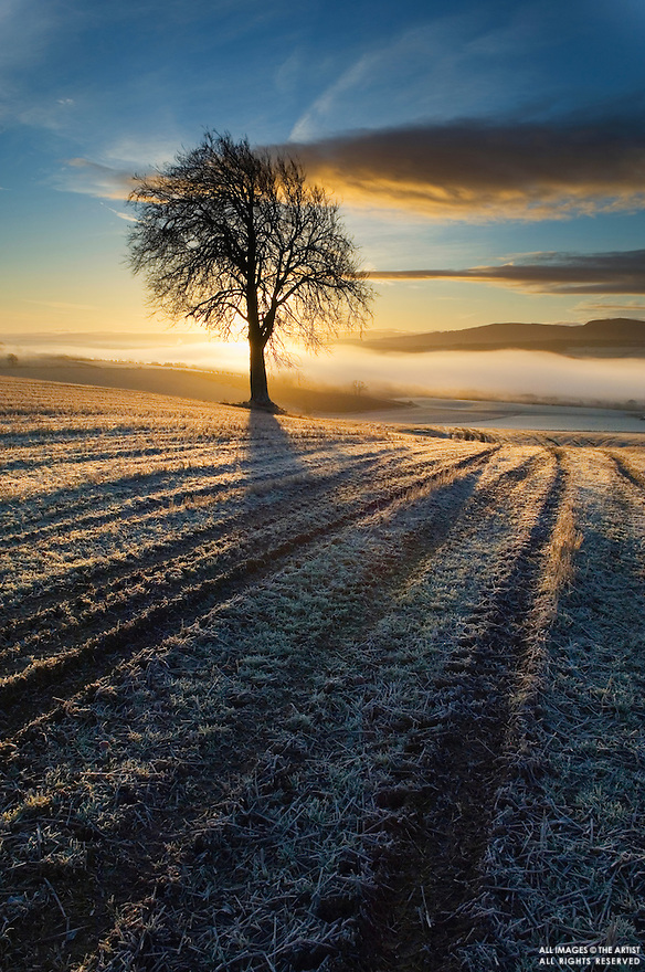 Single tree at dawn, Scottish Highlands