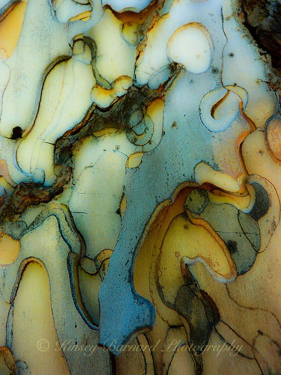 &quot;PONDEROSA PUZZLE&quot;<br /> <br /> <br /> Beautiful, natural designs in Ponderosa bark