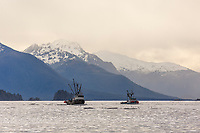 Commercial fishing boats stage during the Sitka sac roe herring fishery, Sitka Sound, southeast, Alaska