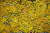 yellow | amarillo | gelb
