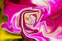 pink and red colors of the nature in spring, flower abstraction, abstract photography, fine art photography, modern art.Pink and red floating shapes. Printed size 4x6 inches on metal