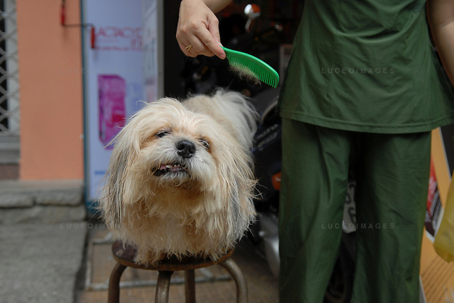 A woman combs her dog in Ho Chi Minh City, Vietnam.