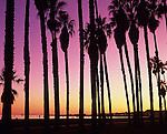 Silhouetted palm trees along shoreline at sunset Santa Barbara California USA