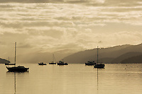 morning light on the Grove arm of Marlborough souds, New Zealand