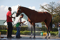 Union Rags getting his bath at Palm Meadows. Boynton Beach Florida. 03-01-2012