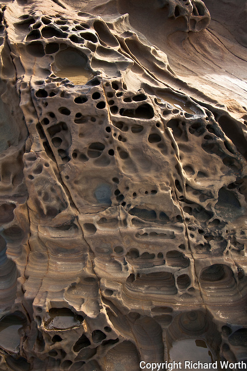 Exposed layers and tafoni formations at Bean Hollow State Beach, California.