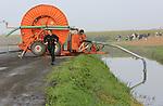 Foto: VidiPhoto<br /> <br /> URSEM - En nog steeds is het te droog. Tenminste voor bietenteler Maikel Stam uit het Noord-Hollandse Ulrum. Om de rode bieten zonder schade te kunnen oogsten, moet de grond goed nat zijn. En daarom draait zijn waterkanon overuren. Stam is met 130 ha. de grootste bietenteler van Nederland. De geoogste bieten gaan direct de opslag in en worden pas na de winter ge&euml;xporteerd naar Polen en Rusland om er borsjts van te maken, een soep van rode bieten. Ondanks het importverbod voor Hollandse producten, verwacht de Noord-Hollandse bietenboer niet dat Putin de Russen &quot;honger laat lijden.&quot;