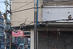 Monkeys climb on city power wires