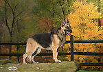 German Shepherd Dog Shopping cart has 3 Tabs:<br />