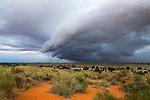 Storm clouds threaten the Kalahari,  Kgalagadi Transfrontier Park in summer, Northern Cape,South Africa, February 2014