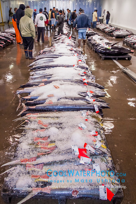 Mahi mahi or common dolphinfish at honolulu fish auction for United fishing agency