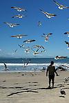 Homem alimentando gaivotas com resto de peixes, na praia de Itapoá, litoral norte de Santa Catarina, Brasil.