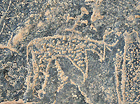 Prehistoric Saharan petroglyph rock art carvings of cattle with a man riding on its back from a site 20km east of Taouz, South Eastern Morocco