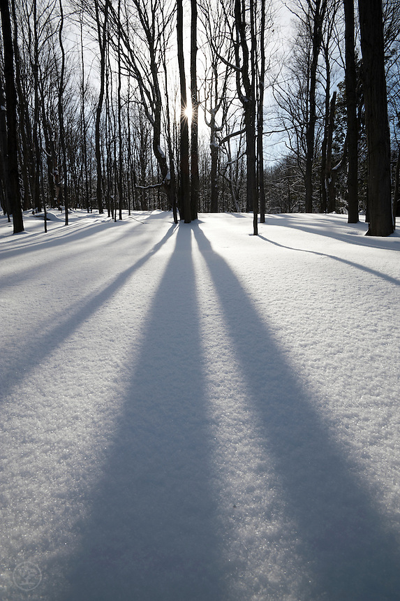 Shadows on snow in the maple woods of an old sugar bush on a winter afternoon, Meaford, Ontario, Canada