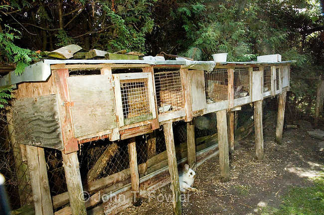 Domestic rabbit cages