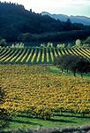 Fall colors in vineyard of Joseph Phelps Winery