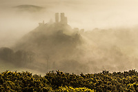Corfe Castle in a heavy morning fog. Isle of Purbeck, Dorset, UK.