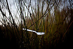 A fork in the brush near the SafeGround camp in Sacramento, Calif., January 15, 2011.