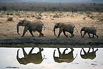 Africa, South Africa, Madikwe. Elephant trio walking at water's edge before dusk.