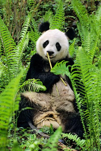 wwf panda forest - photo #40