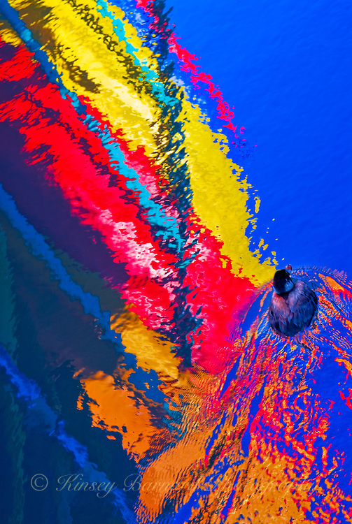&quot;SAILING SOLO&quot;<br />