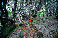 Forest walk on Enderby island, Auckland Islands