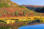 Fall colors reflected in beaver pond, Denali National Park, Alaska