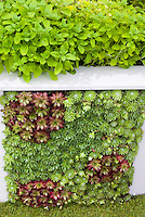 Vertical Gardening Stock Photos