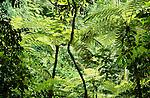 Rainforest, Bwindi Impenetrable Forest National Park, Uganda