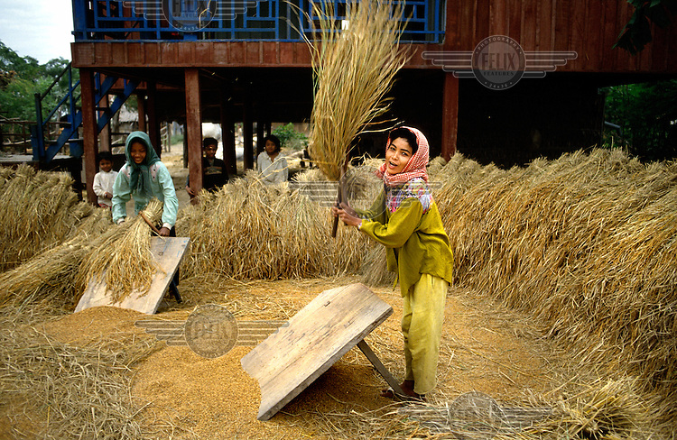 Peasant woman threshing the rice harvest by her home.
