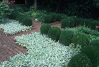Formal garden with Stachys byzantina, Cross Estate, Morristown, NJ. Mirrored design of circular boxwood Buxus shrubs, lamb's ears, inset with brick patio, green serene garden scene