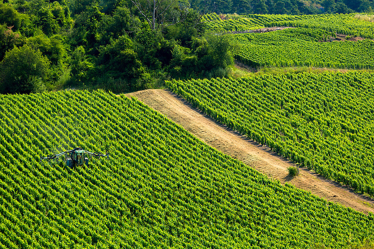 Vine tractor crop-spraying grapevines along the Champagne Tourist Route in the Marne Valley, Champagne-Ardenne, France