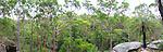 Grass tree on outcrop, Girrakool, NSW
