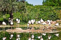Beautiful birds in the zoo