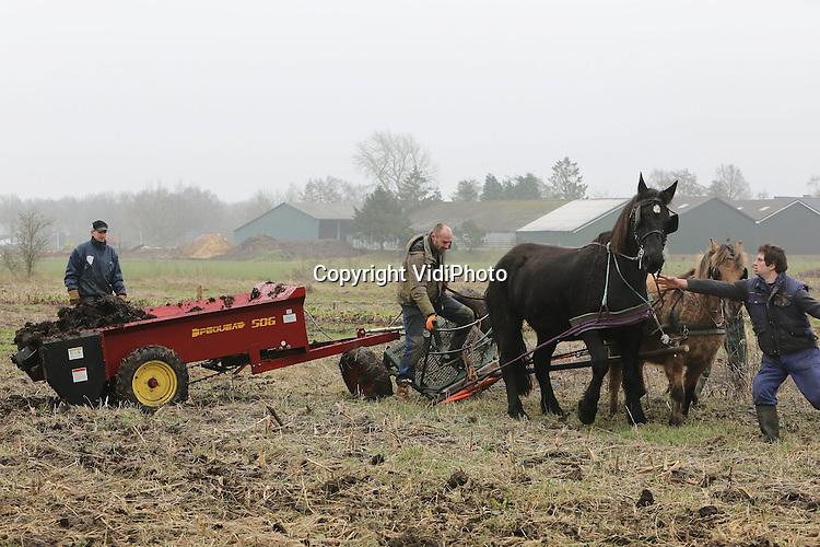 Foto: VidiPhoto..HALLE - Met een meststrooier zoals de Amish gebruiken in de VS en twee paarden er voor, is biologisch akkerbouwer Fred Beijleveld van boerderij Ruimzicht in Halle (Gld.) dinsdag begonnen met een nieuw wijze van landbewerking. In Nederland is dit vrij nieuw. In Duitsland werken al zeker honderd biologische boeren op deze manier. De paarden, afkomstig van een loonwerker die gespecialiseerd is in paardentractie, moesten duidelijk nog even wennen aan de klus. Beijleveld is overgestapt op paardenkrachten omdat op deze wijze de bodem minder verstoord wordt. Een beter bodemleven zorgt ook voor gezondere gewassen. Het is 40 jaar geleden dat er op Ruimzicht voor het laatst paarden aan het werk waren. Ruimzicht bestaat uit een veehouderij van eigenaar Gerjo Koskamp en de biologische tuinderij van Fred Beijleveld. Foto: Te kort door de bocht..