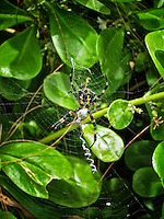 Along a path from the parking lot to the picnic areas, a mother and baby spider made their home.