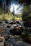 Moss covered boulders in creek.  West coast highway, between Sook and Port Renfrew.Vancouver Island, British Colombia, Canada.