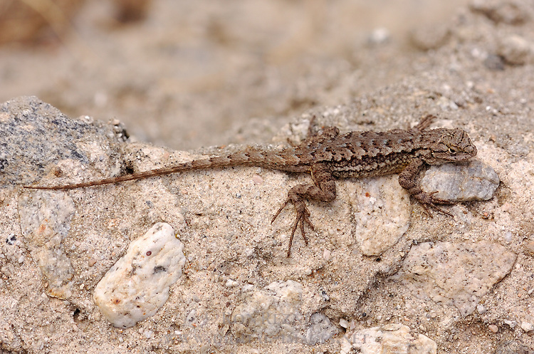 © 2007 Ron Reznick.www,digital-images.net..[#Beginning of Shooting Data Section].Nikon D2Hs..Focal Length: 200mm..Optimize Image: ..Color Mode: Mode II (Adobe RGB)..Long Exposure NR: Off..High ISO NR: Off..2007/06/10 16:42:52.3..Exposure Mode: Aperture Priority..White Balance: Color Temp. (5600 K) ..Tone Comp.: Auto..RAW (12-bit)..Metering Mode: Multi-Pattern..AF Mode: Manual..Hue Adjustment: 0°..Image Size: Large (2464 x 1632)..1/250 sec - F/8..Flash Sync Mode: Not Attached..Saturation: Normal..Exposure Comp.: 0 EV..Sharpening: Normal..Lens: 200mm F/4 D..Sensitivity: ISO 200..Image Comment: (c)RonReznick_www.digital-images.net..[#End of Shooting Data Section].