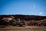 A loader stacks logs at the Sierra Pacific lumber mill in Chinese Camp, Calif., July 25, 2012..CREDIT: Max Whittaker/Prime for The Wall Street Journal.TIMBER